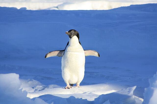Change the Default Torrent Program on Linux