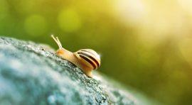 what is slug in wordpress